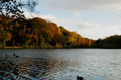 Newmillerdam Autumn Walks. The Pledwick, Wakefield, West Yorkshire